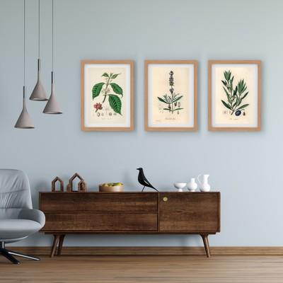 3 Çerçeveli Tablo Seti - Botanik