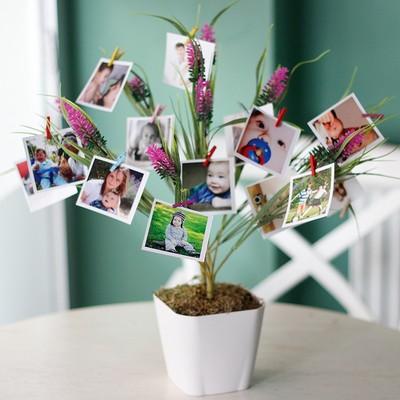 Pembe Fotoğraf Çiçeği