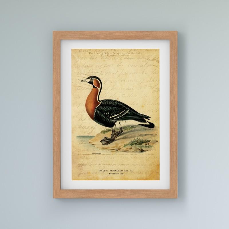 3 Çerçeveli Tablo Seti - Vintage Kuşlar