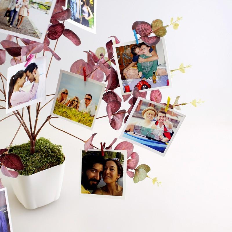 Fotoğraf Ağacı